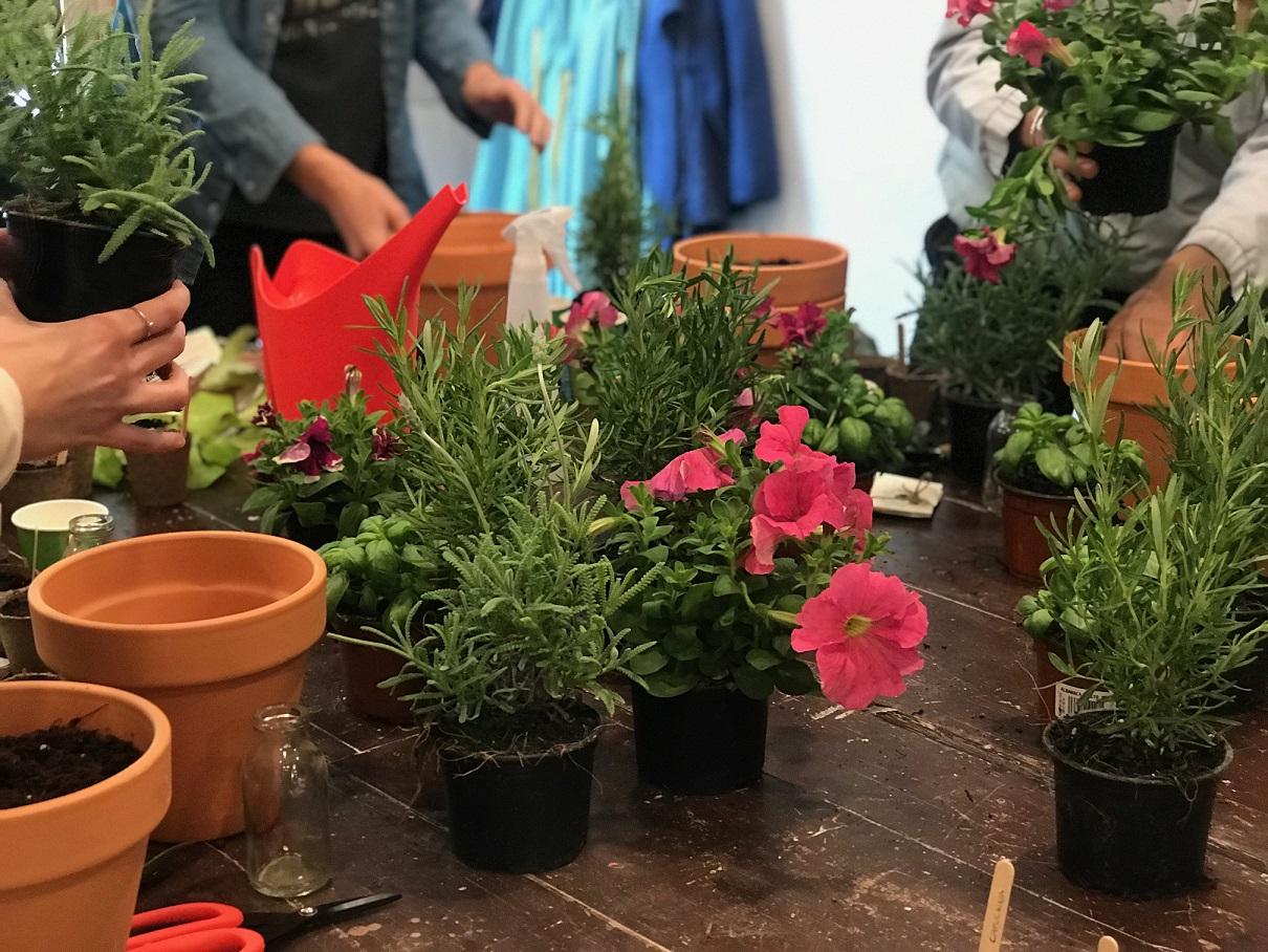 Cultivo de plantas en un entorno urbano, a cargo de Verdópolis